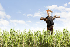 Scarecrow in corn field on a sunny day Royalty Free Stock Photos