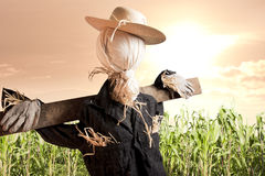 Scarecrow in corn field at sunrise Stock Images