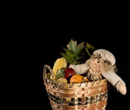 Scarecrow doll in harvest basket. Isolated on black Stock Image