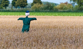 Scarecrow in a Dutch cornfield. A green-clad scarecrow in a Dutch cornfield Stock Photo