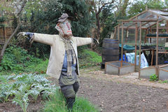 Scarecrow in English garden. Scarecrow with extended arms in English vegetable garden with greenhouse stock photos