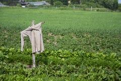 scarecrow för pärlstavslistfälthemslöjd Arkivbilder