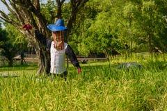 scarecrow för pärlstavslistfälthemslöjd arkivfoton