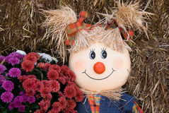 Scarecrow with fall mums Stock Photography