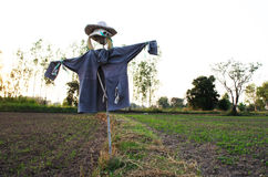 Scarecrow in farm Royalty Free Stock Photos