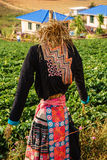 A scarecrow on farm Stock Images