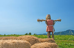 Scarecrow on the farmland Royalty Free Stock Image