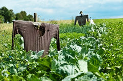 Scarecrow on a field. A scarecrow on a field where cultivated vegetables Royalty Free Stock Photography