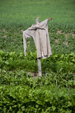 Scarecrow in the field. Scarecrow in the green field Stock Photos