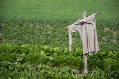 Scarecrow in the field. Scarecrow in the green field Royalty Free Stock Photo