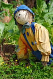 Scarecrow in the field. A scarecrow in the field protecting the crop from birds Stock Image