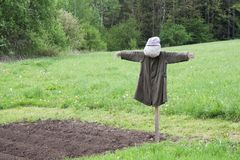 Scarecrow in a field sown Stock Photo
