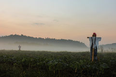 Scarecrow in the fog Stock Images