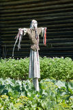 Scarecrow the garden Stock Photography