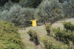 Scarecrow in the garden Stock Image