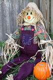 Scarecrow In Garden (angled). A scarecrow leaning against a fence in a garden with a pumpkin beside him royalty free stock images