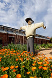 Scarecrow. In a garden photo taken in Botanic garden in Adelaide Royalty Free Stock Photos