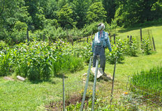 Scarecrow in the Garden Stock Image