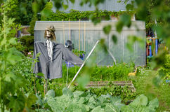 Scarecrow in the garden Royalty Free Stock Images