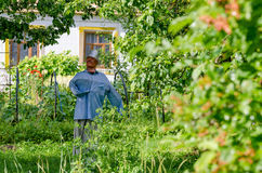 Scarecrow in the garden Stock Photos