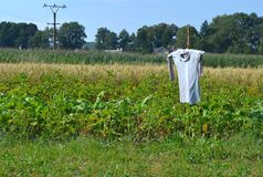 Scarecrow. Guarding potato and wheat field against birds Royalty Free Stock Photos