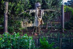 Scarecrow at Hamilton Gardens, New Zealand. A scarecrow at Hamilton Gardens in Hamilton, New Zealand, Aotearoa Royalty Free Stock Photos