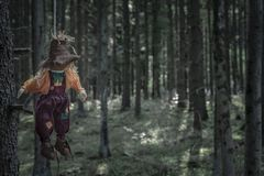 Scarecrow hanged with a rope in a dark forest. Scary scenery with a shabby scarecrow tied to a tree branch with a rope and left to hang, in the dark woods. A stock image