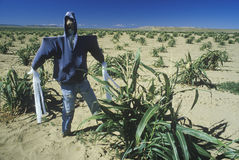 Scarecrow in Hopi Indian corn field Stock Photos