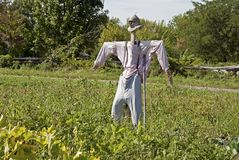 Scarecrow in human clothes Royalty Free Stock Image
