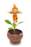 Scarecrow and Hydrangea Stock Image