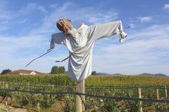Scarecrow i ett bärfält Arkivbild