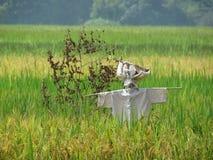 Scarecrow i sätta in Royaltyfri Foto