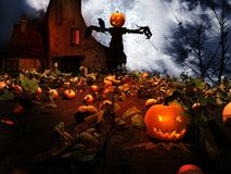 Scarecrow In The Field Of Pumpkins Stock Photos
