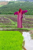 Scarecrow lisu Jacket in rice field, Thailand Stock Image
