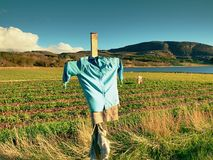 Scarecrow made of old clothes in a field. Blue shirt and brown skirt Scarecrow on cross Stock Image