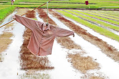 Scarecrow made of old shirt in paddy field Royalty Free Stock Photos