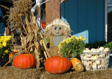 Scarecrow man doll display Stock Photos