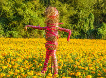 Scarecrow on marigold field Stock Photos