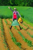 Scarecrow no.1 Royalty Free Stock Photos