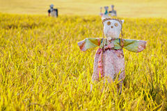 Free Scarecrow On The Rice Field Stock Image - 27198151