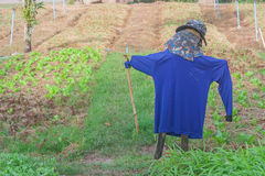 Scarecrow with organic vegetable plot. Royalty Free Stock Photo