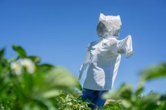 Scarecrow over potato platation leafs Royalty Free Stock Image