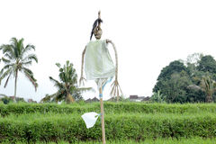 Scarecrow. Photo image with landscape and scarecrow Royalty Free Stock Images