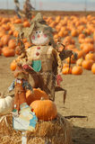Scarecrow in a pumkin patch Stock Photo