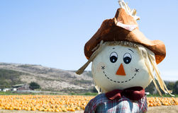 Scarecrow at the pumpkin field. Before the Halloween celebration Stock Photo