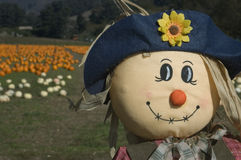 Scarecrow in Pumpkin Patch Stock Photography