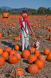 Scarecrow in Pumpkin Patch Stock Image