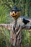Scarecrow with Pumpkinface. With a Crow on his Shoulder Royalty Free Stock Image