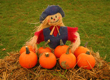 Scarecrow and Pumpkins. A scarecrow selling pumpkins Royalty Free Stock Photo