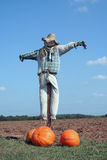Scarecrow and pumpkins Royalty Free Stock Photography